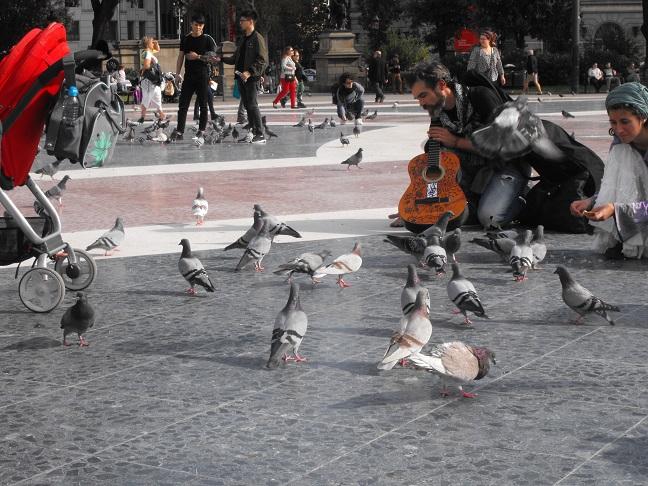Website - Pigeons